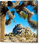 Joshua Tree And Jumbo Rocks By Quail Springs In Joshua Tree Np-ca Acrylic Print