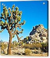 Joshua Tree And Jumbo Rocks Near Quail Spring In Joshua Tree Np-ca  Acrylic Print