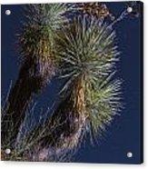 Joshua Tree By Moonlight Acrylic Print