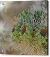 Joshua Tree Cholla Cactus Acrylic Print