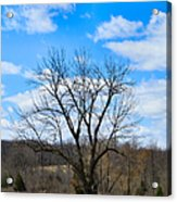 Joshua Tree Country Style Acrylic Print