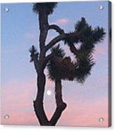 Joshua Tree Full Moon  Acrylic Print