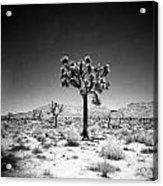 Joshua Tree Holga 1 Acrylic Print