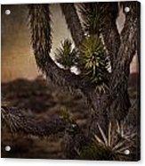 Joshua Tree In Mojave National Preserve Acrylic Print