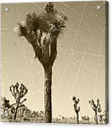 Joshua Tree National Park - Old Vintage Sepia Acrylic Print