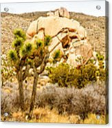 Joshua Tree National Park Skull Rock Acrylic Print