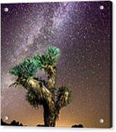 Joshua Tree Vs The Milky Way Acrylic Print