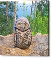 Journey Of Burrowing Owl Acrylic Print