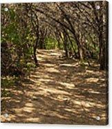 Journey Through The Cedars Acrylic Print