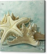 Journey To The Sea Starfish Acrylic Print