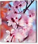 Joy Of Spring. Pink Spring In Amsterdam Acrylic Print