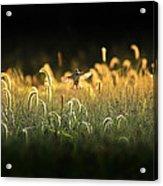 Joy Of Summer - Version 2 Acrylic Print
