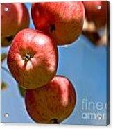 Juicy Harvest Acrylic Print