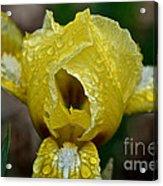 Juicy Lemon Petals Acrylic Print