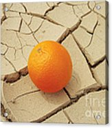 Juicy Orange And Drought. Acrylic Print by Alexandr  Malyshev