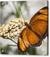 Julia Butterfly Acrylic Print