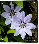 Julia's Bouquet   #6321 Acrylic Print