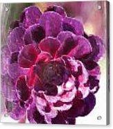 Jumbo Blossom Acrylic Print