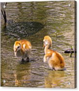 Jump In. The Water Is Fine Acrylic Print