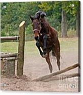 Jump Jump Acrylic Print