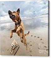 Jumping Dog Acrylic Print by Eldad Carin