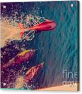 Jumping Dolphins Acrylic Print