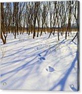 Jumping Shadows  Acrylic Print