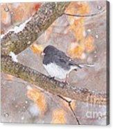 Junco In Snow Acrylic Print