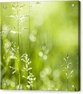 June Green Grass  Acrylic Print by Elena Elisseeva