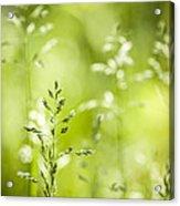June Green Grass Flowering Acrylic Print