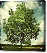 June Acrylic Print