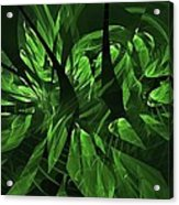 Jungle Clearing  Acrylic Print