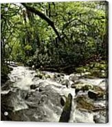 Jungle Flow Acrylic Print