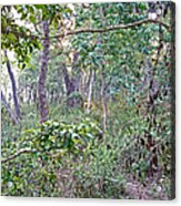 Jungle Forest In Chitwan Np-nepal Acrylic Print