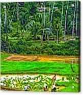 Jungle Homestead Paint Version Acrylic Print