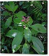 jungle in La Amistad National Park Panama 4 Acrylic Print