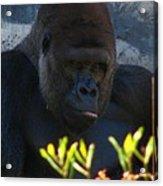 Jungle Master Acrylic Print
