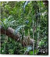Jungle Acrylic Print