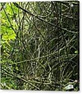 Jungle Vines Acrylic Print