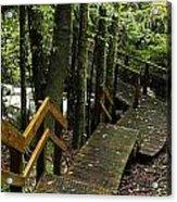 Jungle Walkway Acrylic Print