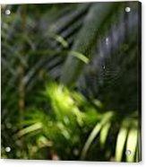 Jungle Web Acrylic Print