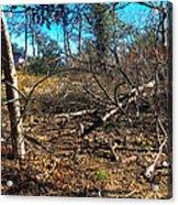 Junglescape1 2009 Acrylic Print