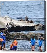 Junior Lifeguards And Sea Lions Acrylic Print