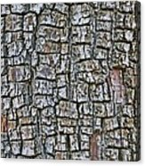Juniper Bark- Texture Collection Acrylic Print
