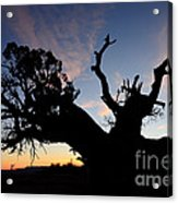 Juniper Tree, Canyonlands National Park Acrylic Print