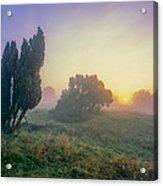 Juniper Trees In Early Morning Fog  Acrylic Print
