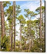 Ancient Looking Florida Forest At Aubudon Corkscrew Swamp Sanctuary Acrylic Print