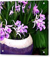 Just A Bowl Of Cattleyas Acrylic Print
