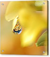 Just A Drop Of Spring Acrylic Print