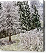Ice Coating Trees And Lawn In A Back Yard Acrylic Print
